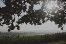 Load image into Gallery viewer, 2020 Vineyard Lunch Series