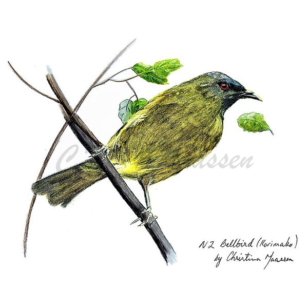 Bellbird Cards by Christina Maassen