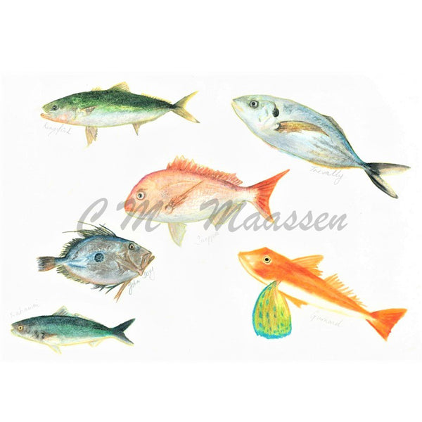Northland Fish Cards by Christina Maassen