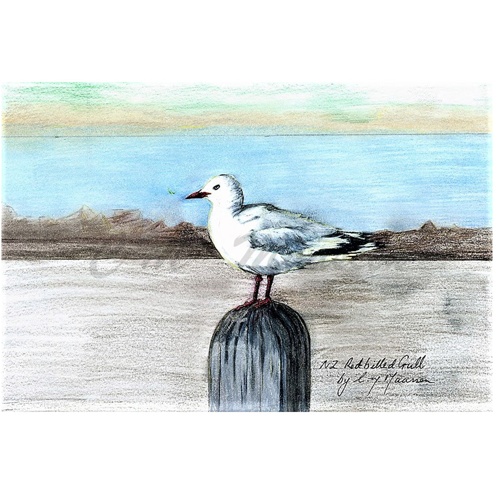 Red Billed Gull Print by Christina Maassen