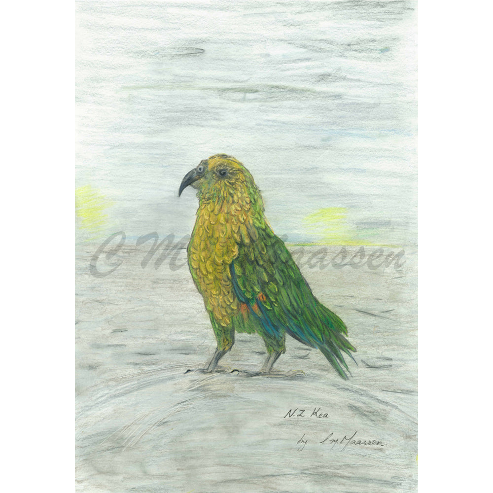 Kea Print by Christina Maassen