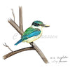 Kingfisher Print by Christina Maassen
