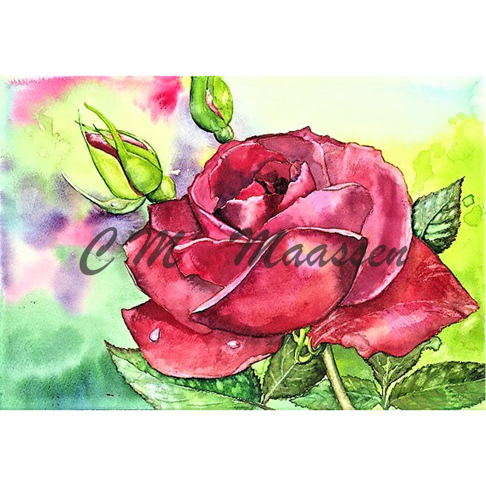 Red Rose Card by Christina Maassen