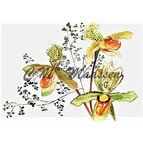 Slipper Orchid cards by Christina Maassen