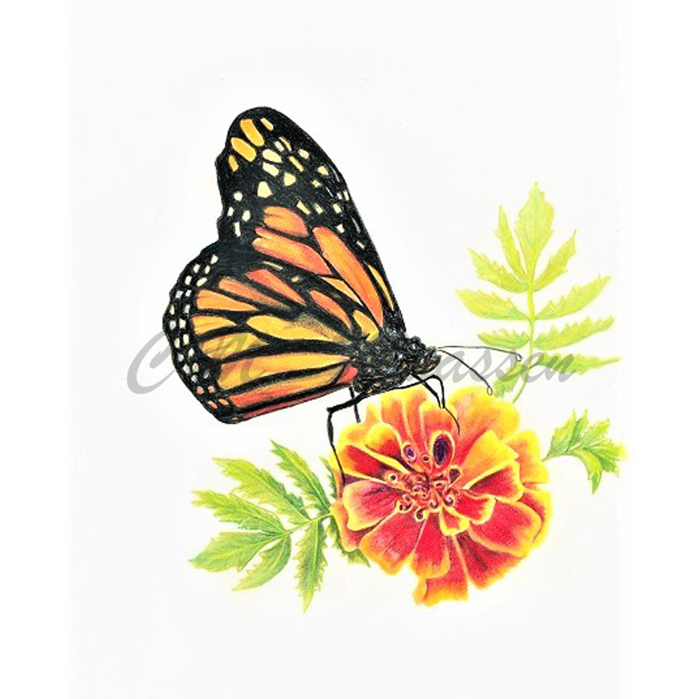 Monarch Cards by Christina Maassen
