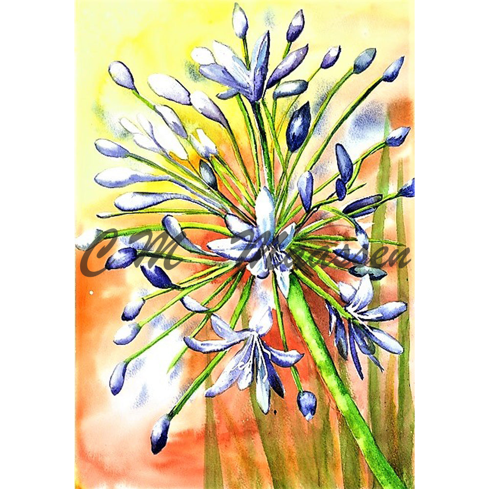 Agapanthus Cards by Christina Maassen