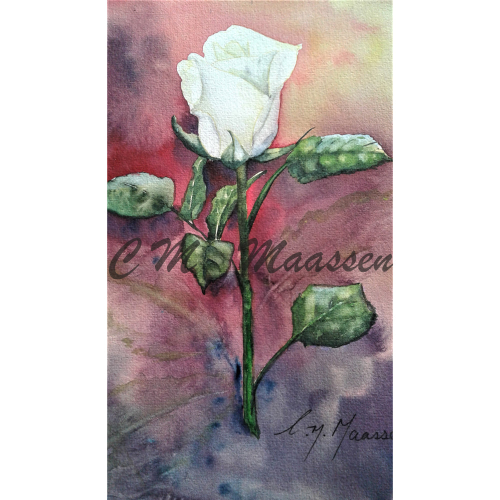 White Rose on Purple Card by Christina Maassen