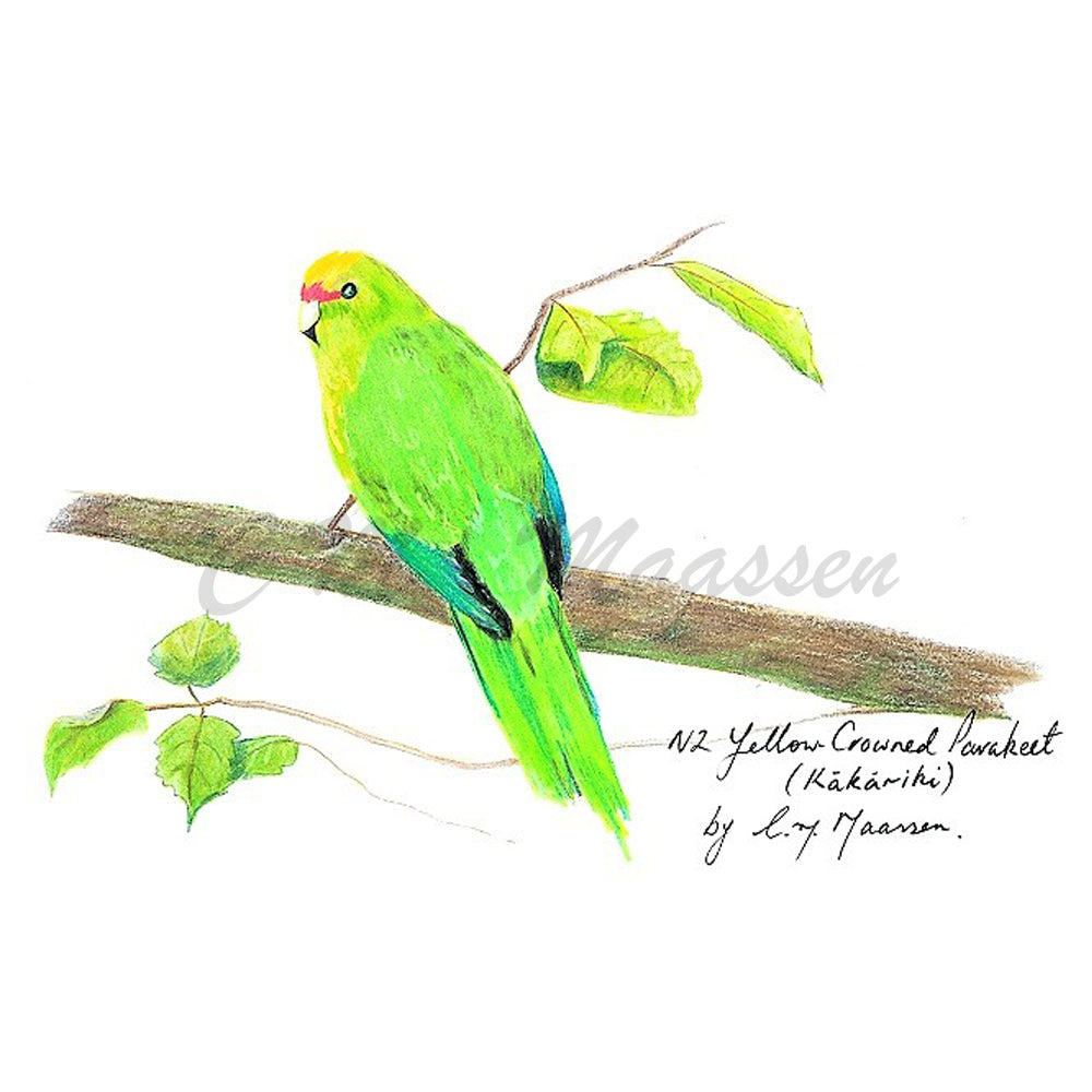 Parakeet Cards by Christina Maassen
