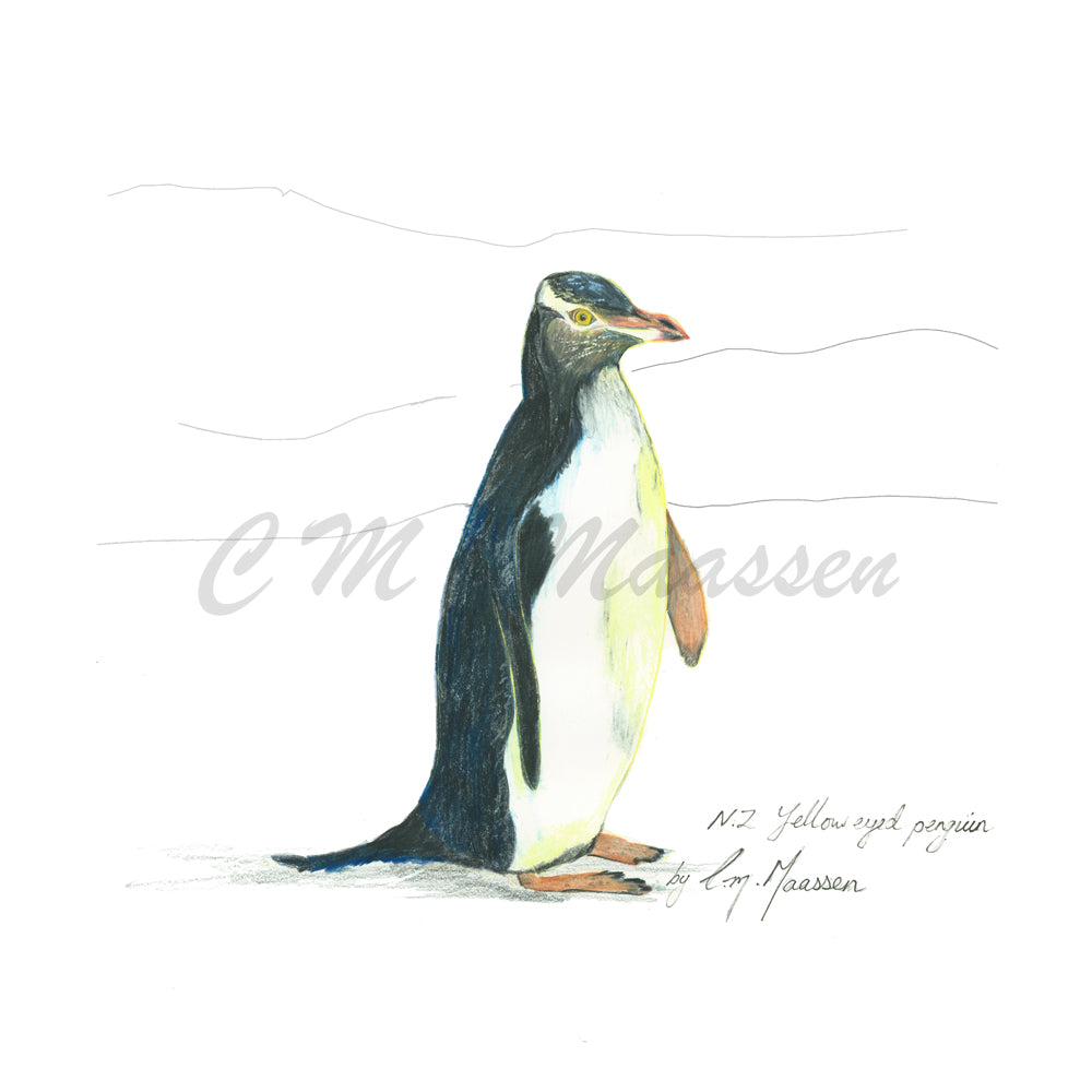 Yellow Eyed Penguin Print by Christina Maassen