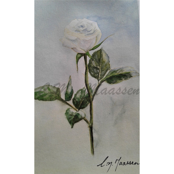 White Rose on Blue Card by Christina Maassen