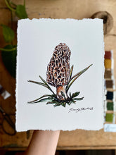 "Load image into Gallery viewer, ""Morel"" Mushroom Cotton Art Print with Hand-Torn Deckled Edges"