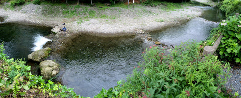 The Youzawa trout stream in Japan