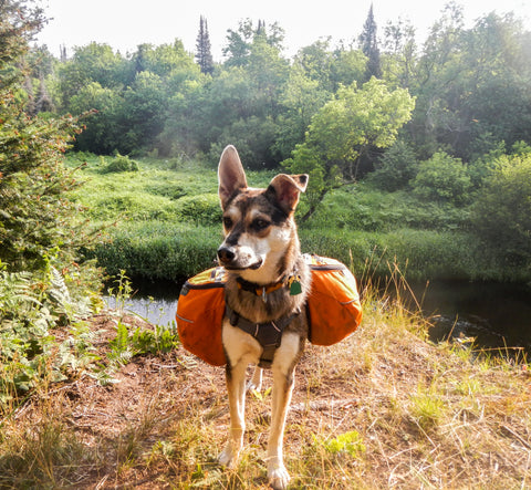 Dog with Ruffwear backpack hiking near river on the North Country Trail