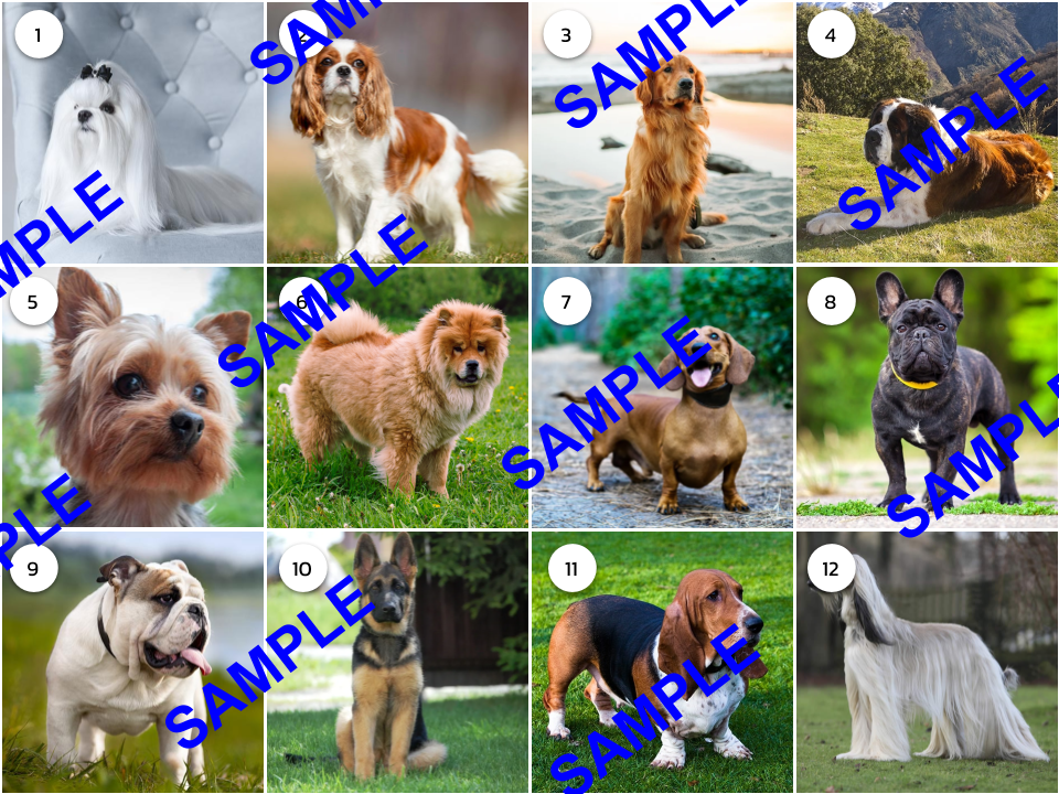 Dog Breeds Picture Round