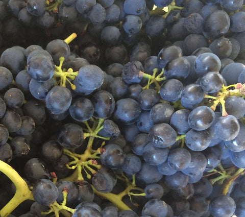 Nebbiolo grapes from vintage 2018