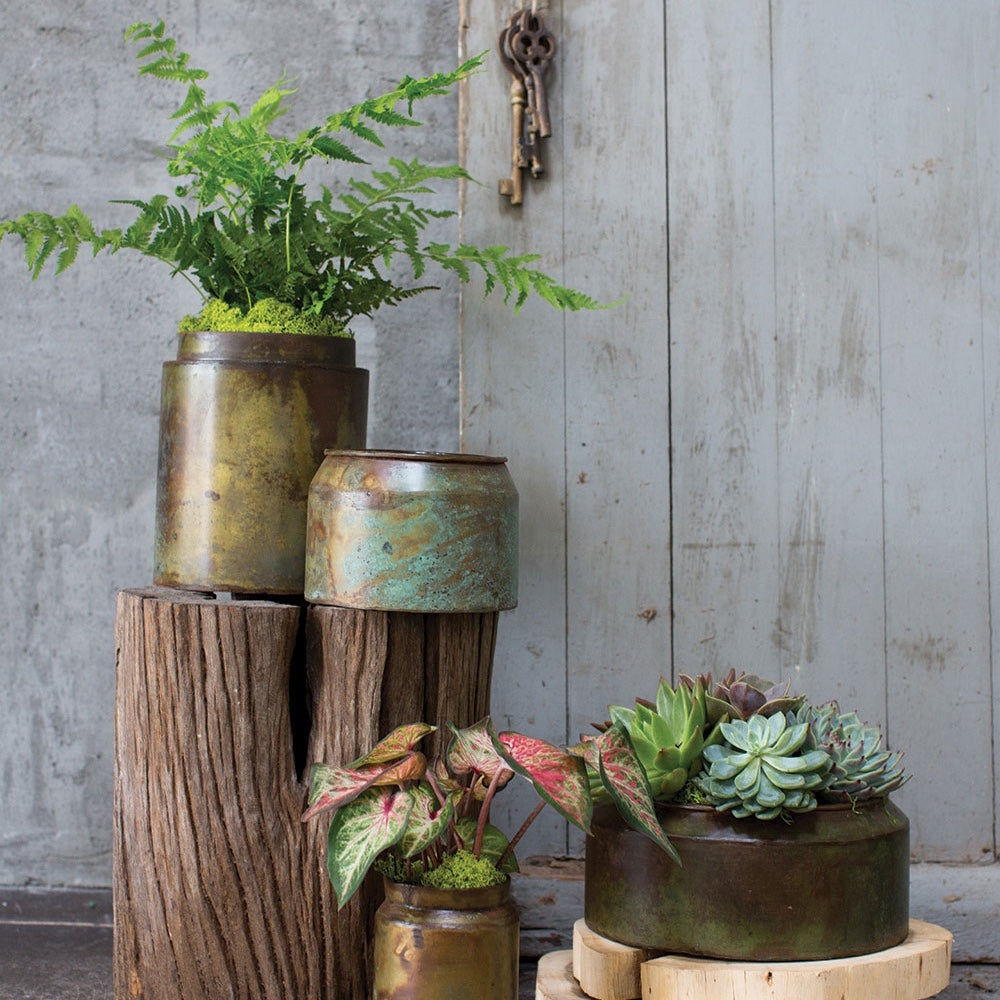 Outdoor scene, with some metal Pots and Planters with a copper finish and a rusted look, some Succulents and ferms are in the pots.