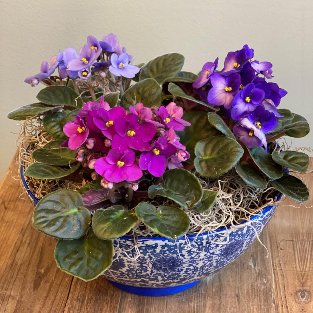 African violets in a Chinois Bowl