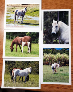 Horses Note Card Set