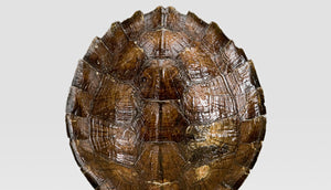 Mounted Wooden Turtle Shell