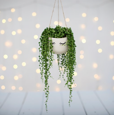 Sass & Belle - Eyes Shut Hanging Planter