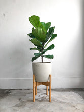 Load image into Gallery viewer, Adjustable Plant Stand