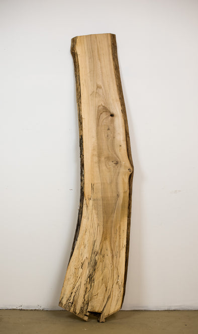 Spalted Elm - S119