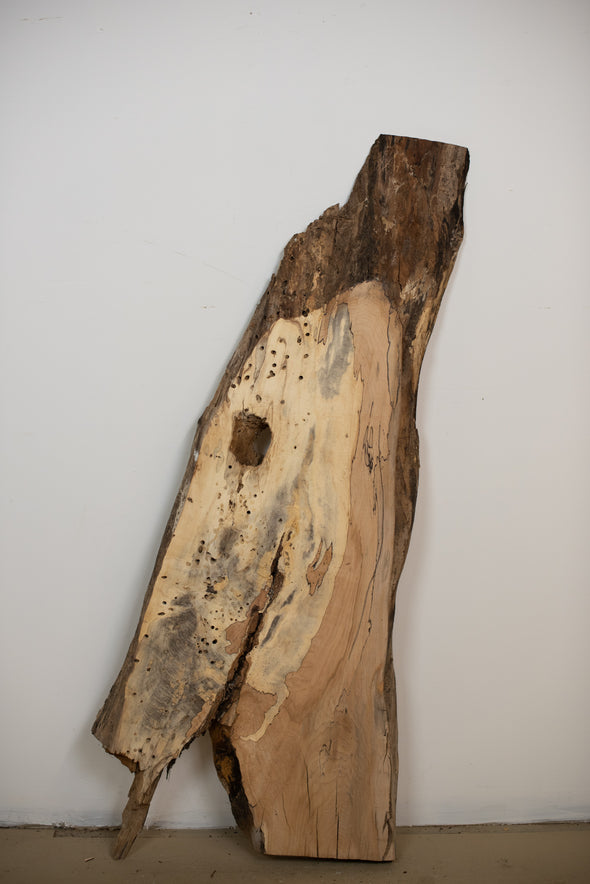Spalted Maple - S263