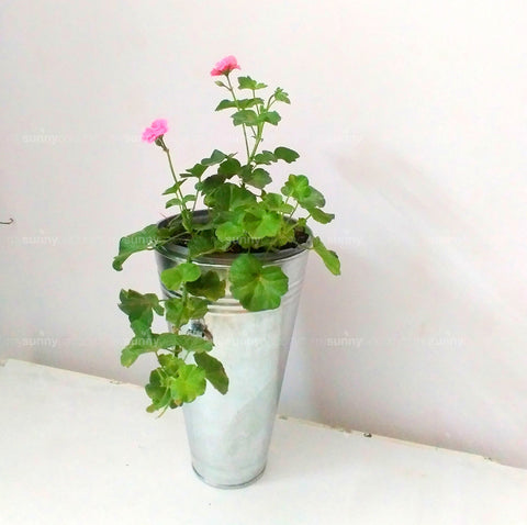 Metal Conical Planter with handle