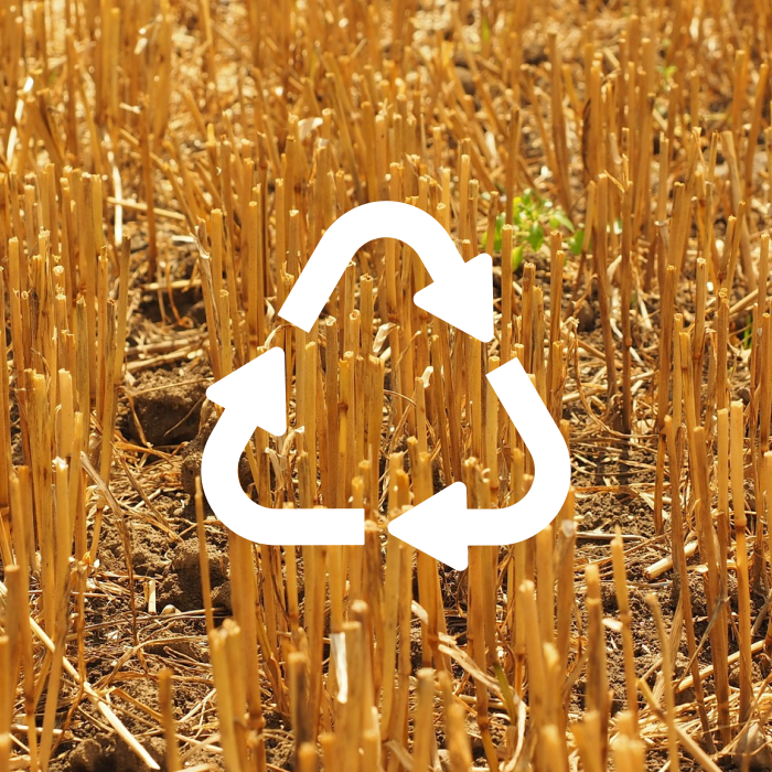 Harvested wheat with a recycle logo overlayed on top symbolizing a waste product being reimagined