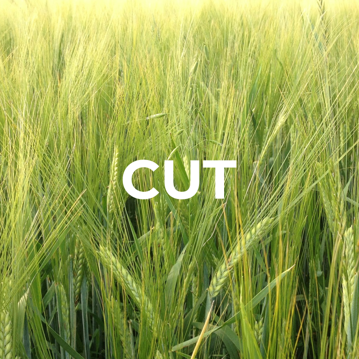 Wheat field with the word cut overlay-ed on type describing the first step in the cleaning process