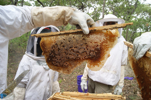 Raw honey from an African forest