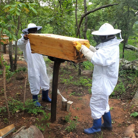 Traditional beekeepers in a forest