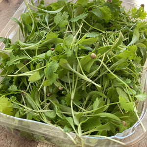 Micro coriander salad leaves in a punnet