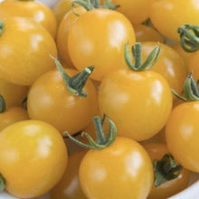 Load image into Gallery viewer, Tomatoes Yellow Cherry