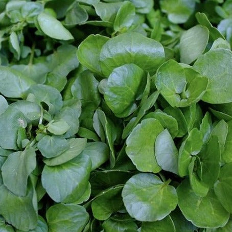 fresh green watercress
