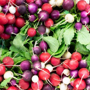 mixed colour red and purple radishes