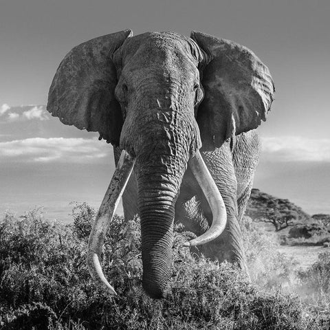 virtual tour - David Yarrow Best of 2020