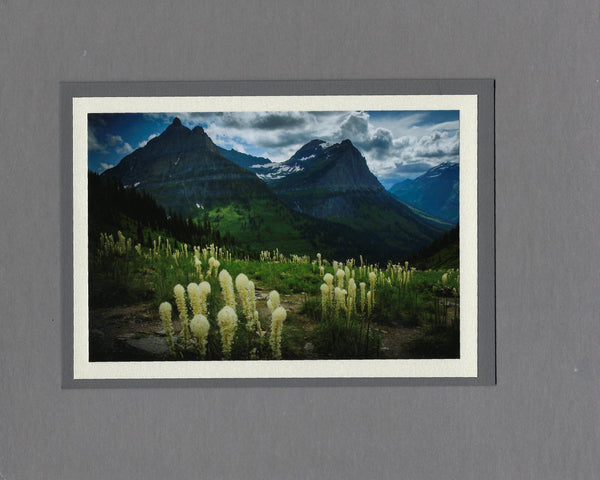 Handmade Photo Card of Bear Grass Blank Greeting Card