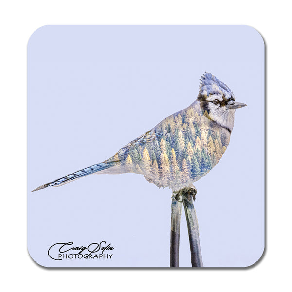 Set of Four Double Exposure Bird Photo Coasters