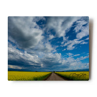 Canola Fields Northwestern Montana 8 X 10 Metal Print