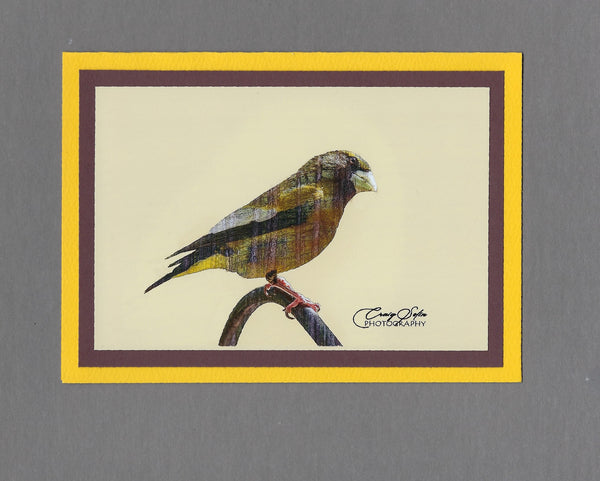 Handmade Double Exposure Photo Cards Evening Grosbeak Blank Greeting Card