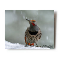 Northern Flicker In Snowfall 8 X 10 Photographic Metal Print