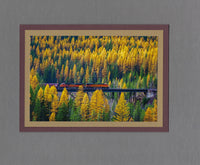Handmade Photo Freight Train in Fall Larches Blank Greeting Card