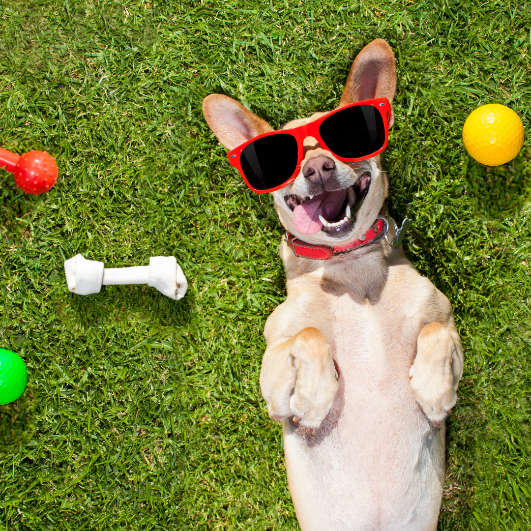 Should You Give Dog Probiotics Every Day?