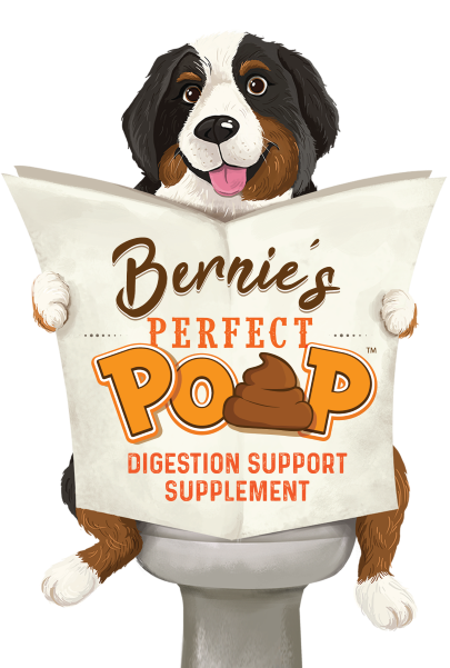 Bernie's Perfect Poop - Digestion Support Supplement