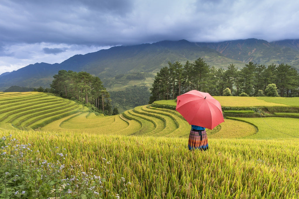 Woman with umbrella stands overlooking fields and hills