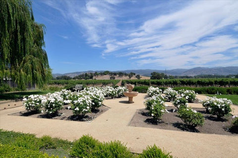 Image of Elite Napa Valley Tour