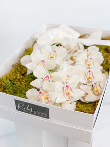 Luxury Orchid Presentation Box