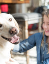 Consumer trust and the pet food industry: bridging the gap
