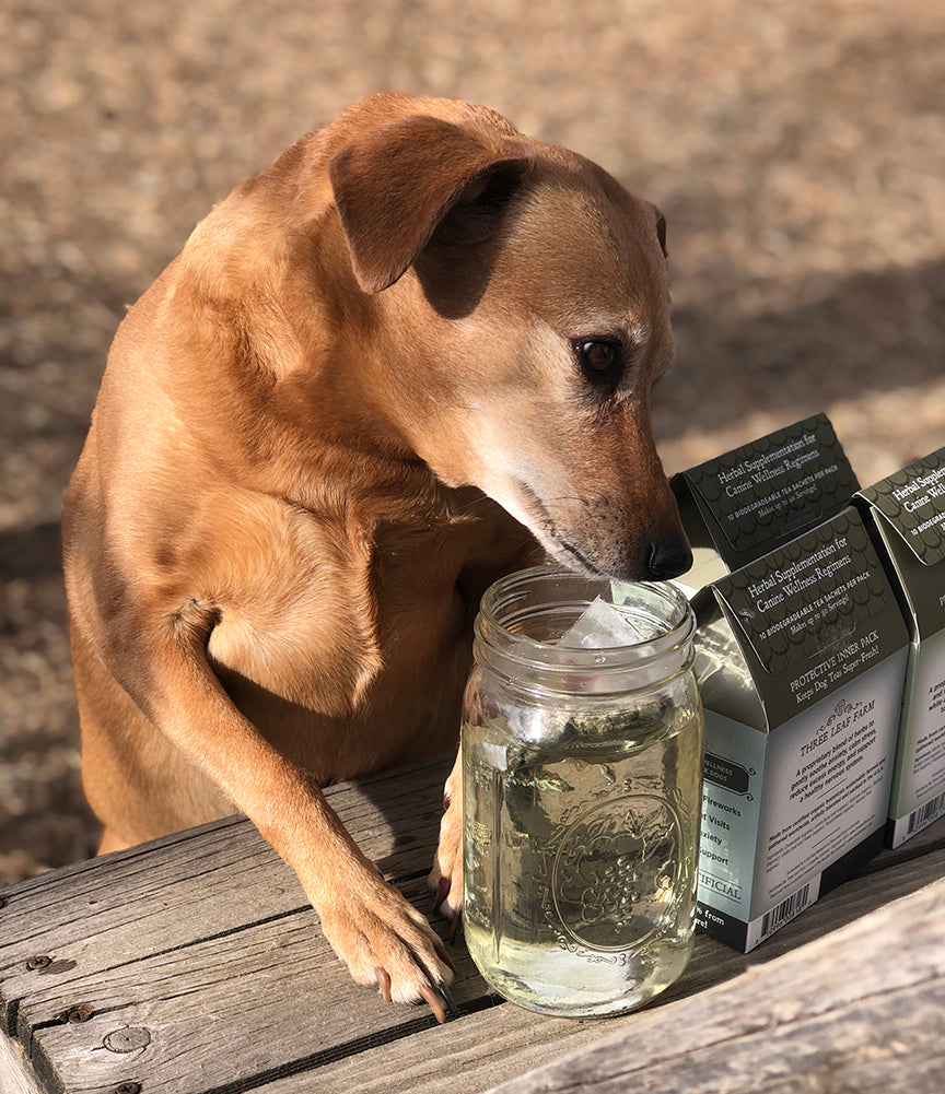 Herbal Dog Tea - Organic Tummy Tamer™